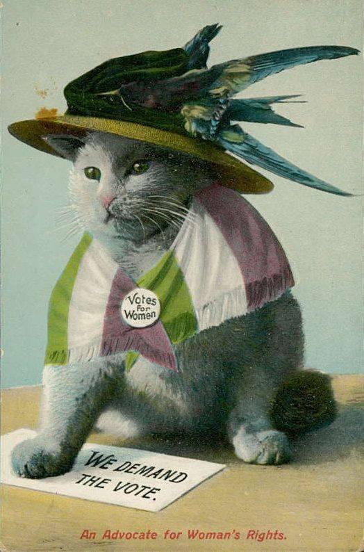 על חתולים וסופרג'יסטיות